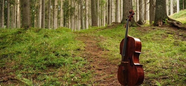 Flora er Decora: la serata inaugurale è dedicata alla Foresta dei Violini