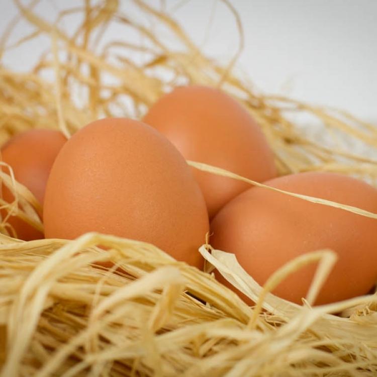 Le uova :: Le materie prime :: Panificio Fantuzzi